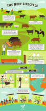 349 best animal science images on pinterest animal science