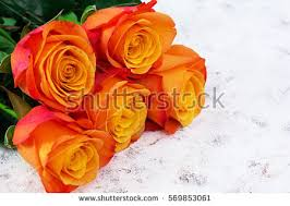 Multicolor Roses Multicolored Roses Stock Images Royalty Free Images U0026 Vectors