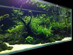Aquascape Fish Aquascape Fish Tank Stone And Plant Ideas Betta Fish Pinterest