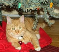 cat finders blog archive lost orange and white tabby cat