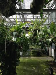 recon native plants in defense of plants