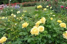 flower garden pictures photos