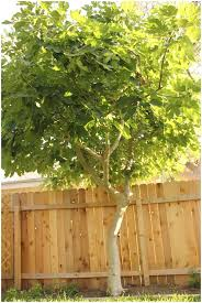 Backyard Trees Landscaping Ideas Backyards Bright Trees For Small Backyards 14 Front Yard