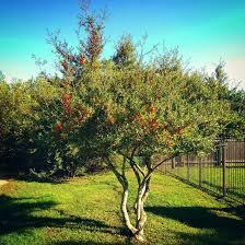 spotlight tree yaupon johnson pulse linkedin
