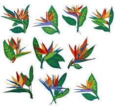 images for u003e bird of paradise flower tattoo flowers pinterest