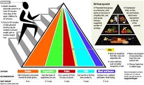 food pyramid food faq