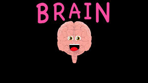 The Anatomy Of The Human Brain The Human Body For Kids Learn About The Human Body For Children