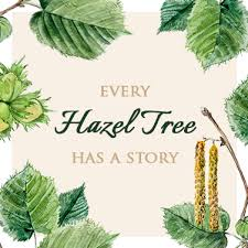 the ancient meaning of a hazel tree the present tree