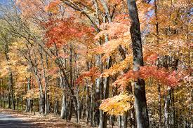 fall color krcu