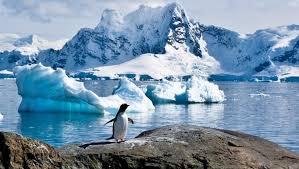 imagenes de la antartida antártida se está volviendo verde a causa del cambio climático