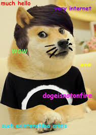 30 best much doge so wow images on pinterest ha ha doge meme