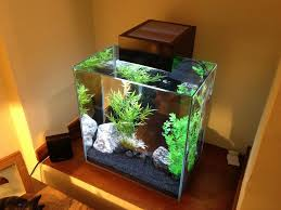 Fluval Edge Aquascape Just Got A Fluval Edge Tank Stock Page 1 All Creatures Great