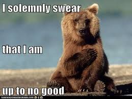 Bear Memes - best 25 bear meme ideas on pinterest black bear attacks bear