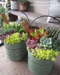 creative indoor and outdoor succulent garden ideas succulents