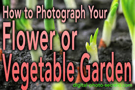 10 tips for better flower photography digital photo secrets