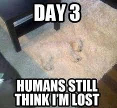 Jokes Meme - 20 funny animal jokes and memes funny animal jokes animal jokes