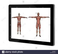 Human Anatomy Male Human Anatomy Male Muscles Show On Tablet Made In 2d Software