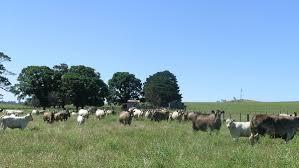 pastoral farming wikipedia