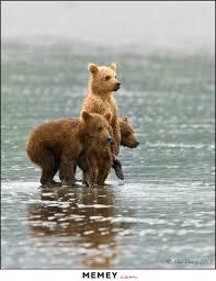 Funny Bear Meme - bear memes funny bear pictures memey com