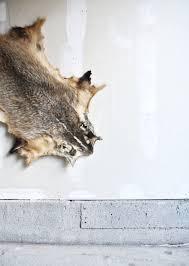 Deer Hide Tanning Companies Sale Vintage Tanned Badger Hide Vintage Taxidermy Badger