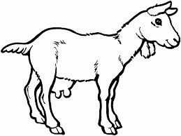 free coloring pages goats free printable goat coloring pages for kids goats