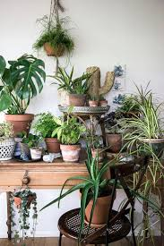 my plant gang with urban jungle bloggers plants indoor and