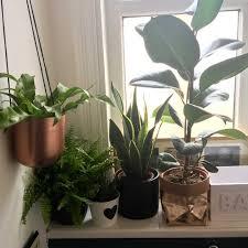 Best Plants For Bathroom Bathroom Design Marvelous Plants That Thrive In Bathrooms Best