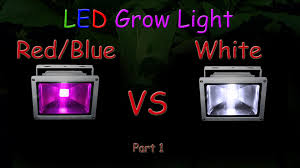 white led vs blue led grow light grow test part 1