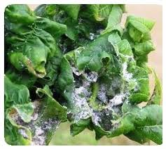 list of garden pests common vegetable garden pest list a z