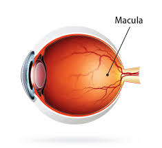 blue light and macular degeneration protect yourself from macular degeneration with iris iris