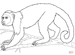 capuchin monkey coloring page free printable coloring pages