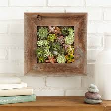 succulent living wall planter kit vertical container gardening