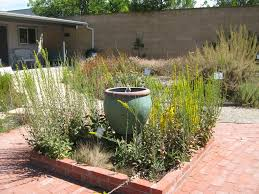 southern california native plants landscaping mother nature u0027s backyard a water wise garden plant of the month
