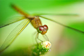 232 dragonfly hd wallpapers backgrounds wallpaper abyss