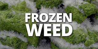 How Far Away Should Marijuana by Should You Freeze Your Weed