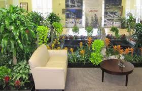 the best indoor plants plant the best indoor plants for australian offices stunning