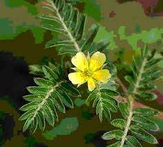 tanaman untuk pria perkasa titan gel original www