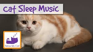 Why Does My Cat Sleep On My Bed Cat Lullaby Cat Sleep Music Sleep01 Youtube