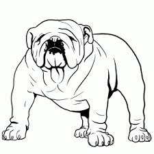 bulldog sketch 100 images bulldog sketch arty sally paintings