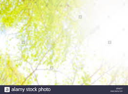 natural blurred abstract background made of tree leaves against