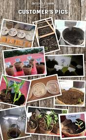 nature u0027s blossom bonsai tree kit grow 4 bonsais from seed