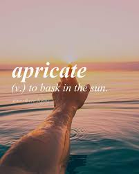 Other Words For Comfortable Best 25 Beautiful Latin Words Ideas On Pinterest Beautiful
