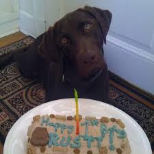 dog birthday cake dog birthday cake