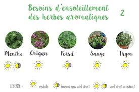 les herbes de cuisine faire le plan de jardin d herbes aromatiques sur balcon au