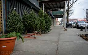 black friday christmas tree at home depot photo essay nyc u0027s incredible christmas tree seller subculture