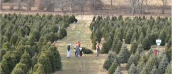 evergreen valley christmas tree farm cut your own christmas tree