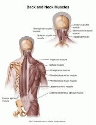Anatomy And Physiology Glossary 22 Best Anatomy Images On Pinterest Anatomy Fitness Exercises