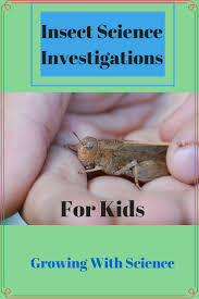insect science investigations for kids dragonflies and