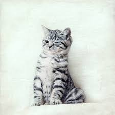 stripey kitten little tiger print silver turquoise green