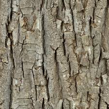 high resolution seamless textures wood 26 tree bark seamless